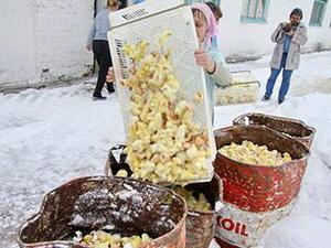 Жуткое видео из Курской области. Из-за финансовых проблем плачущие птичницы выбрасывают птенцов сотнями тысяч на мороз и заливают водой